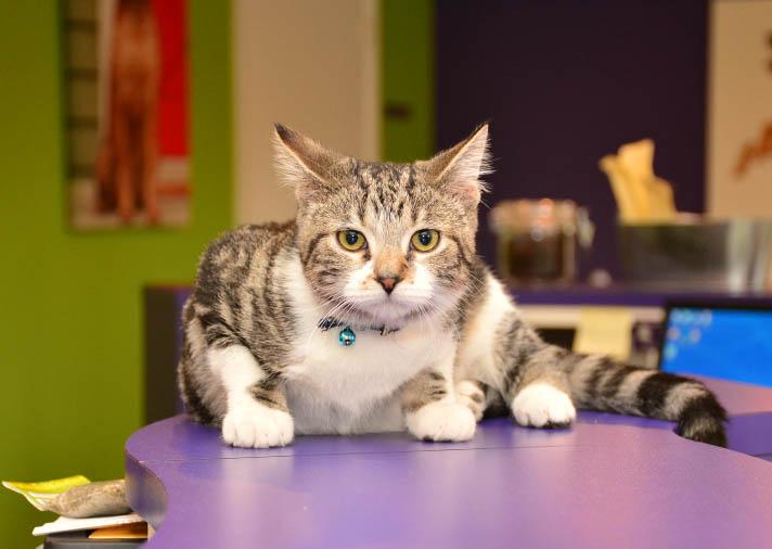 dog cat vaccination services at smartvet