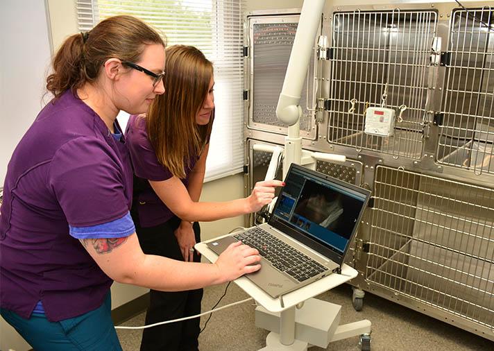 Pet Dentistry at Smart Vet